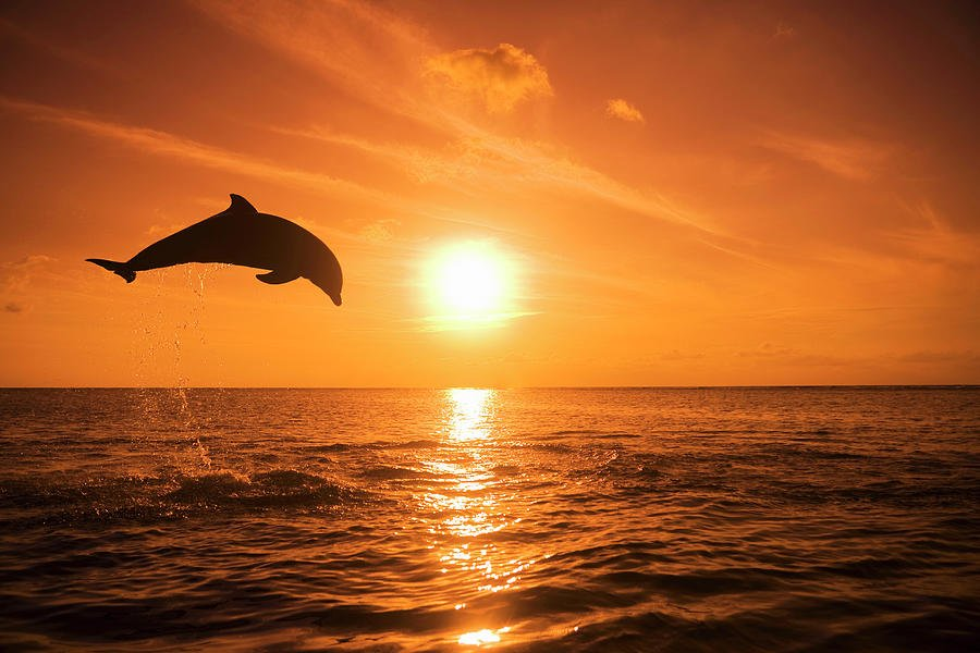 Animalsimage On Twitter Look Amazing Dolphins Jumping In The
