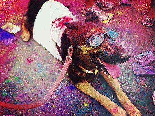 FOTO The Color Run per tutti anche per i nostri amici a quattro zampe