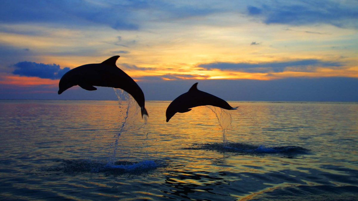 Animalsimage On Twitter Look Wonderful Dolphins Jumping In The Sunset Making A Heart Photo At Tco CCs65e56lC