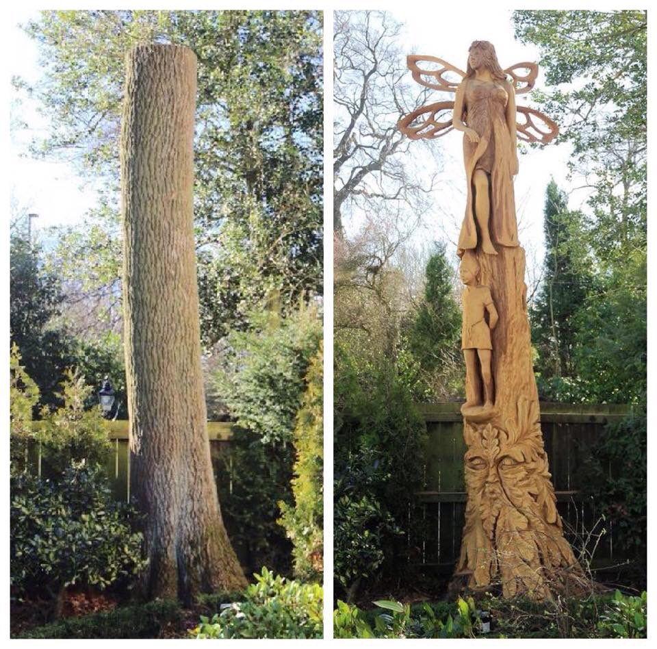 Tommy craggs on twitter quot before and after ash tree stump