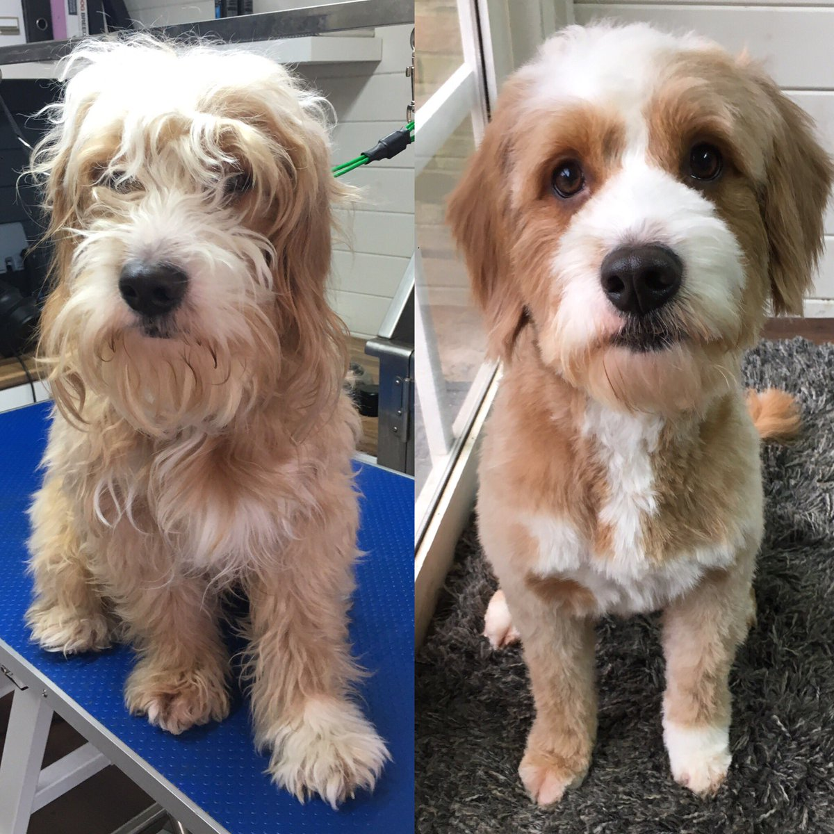 Dog Grooming Midland