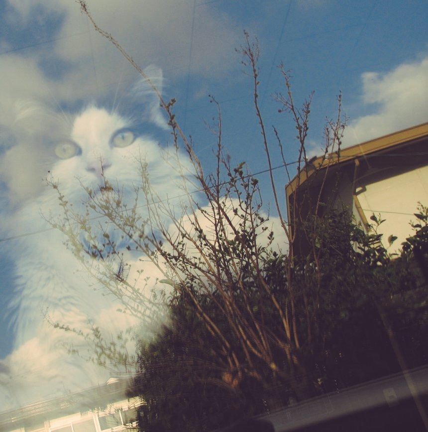 窓に映り込む景色のほうがハッキリしてて変な写真に pic.twitter.com/DSxegnguVg
