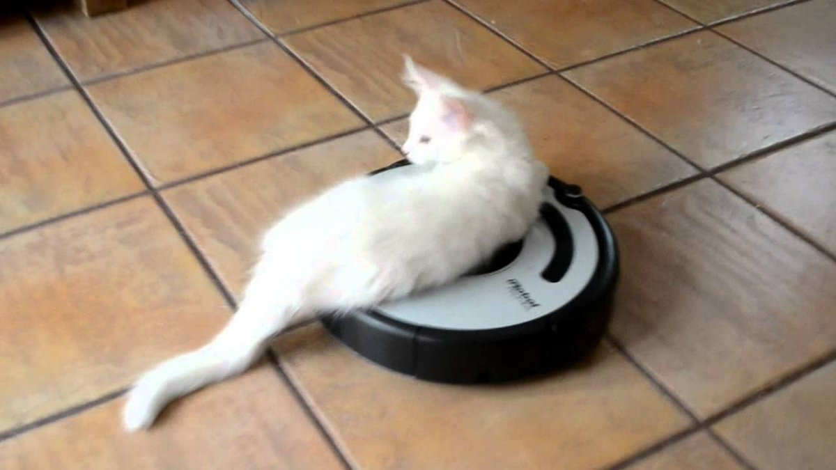 Funny Cats On Twitter My Cat Rides Robot Hoover View More Https - 16 funniest cat tweets 2016