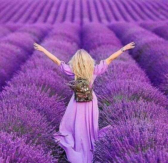 Janie Smith On Twitter Purple Meadows The Sweet Fragrance Of