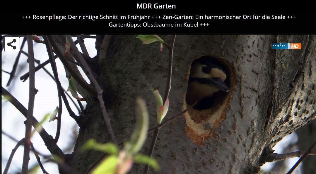 Mdr Mediathek Garten Garten Design Idee Fotos