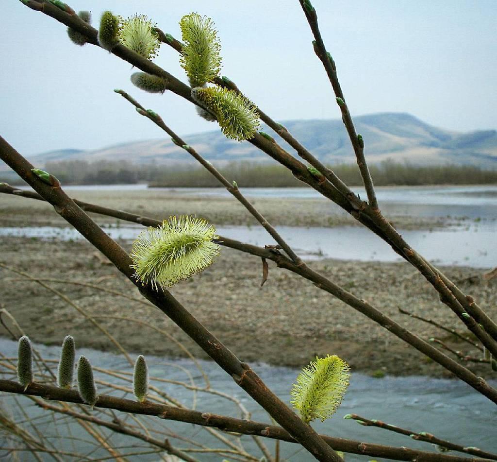 синица весна в хакасии фото панно поможет