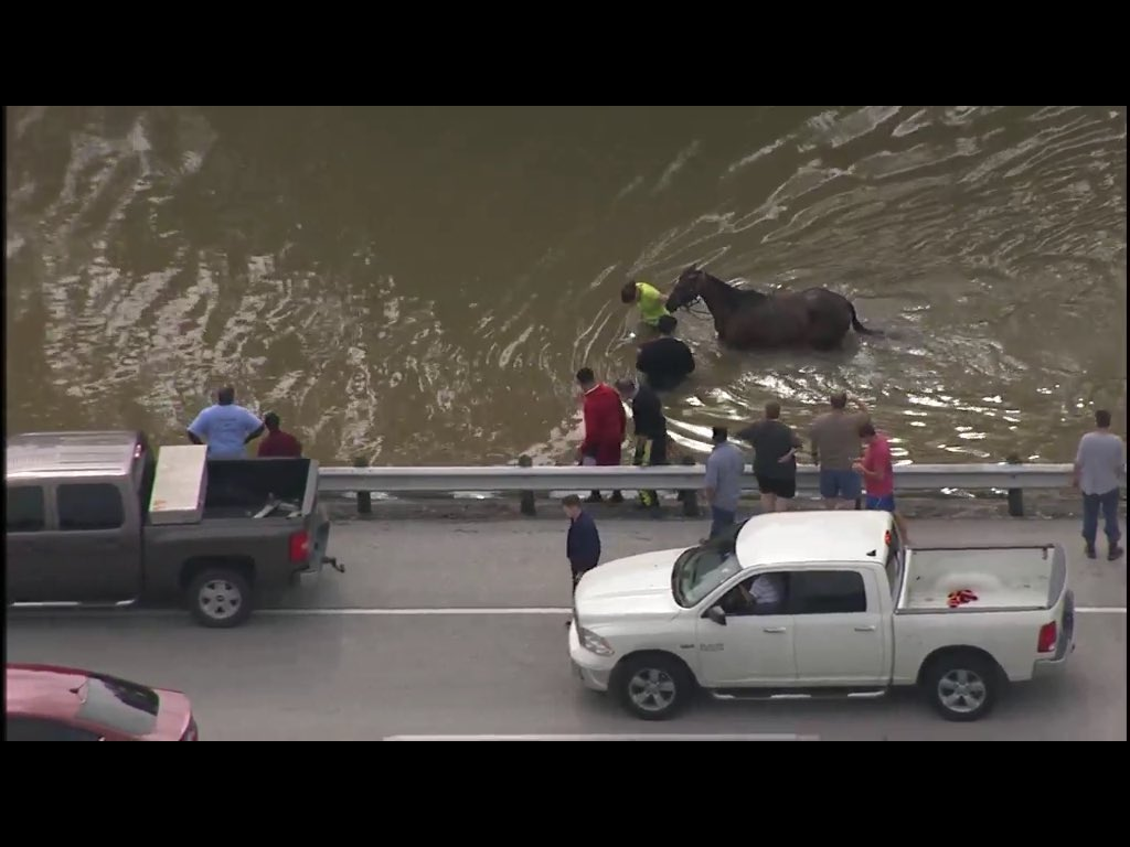 "Success. Horse rescues in-progress. #houstonflood ""Live"" - https://t.co/LY8OZe0DXr https://t.co/mT2WdPsmnq"