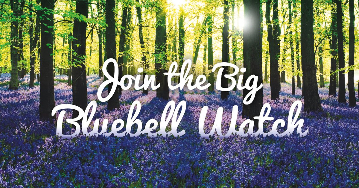 Track how spring sweeps across the nation and record your first sighting of #bluebells here https://t.co/woeUvHwADJ https://t.co/hqS2X6ew3p