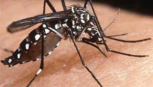 "Escalation ""esplosiva"" del Virus Zika: a rischio in 2,2 miliardi di persone"
