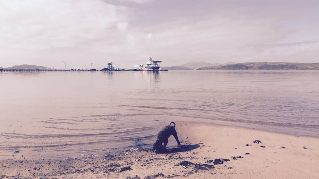 Our TFR Mascot Alfie catching some rays And a paddle in the sea #largs #florist #largsyachthaven #flowerdeliveries