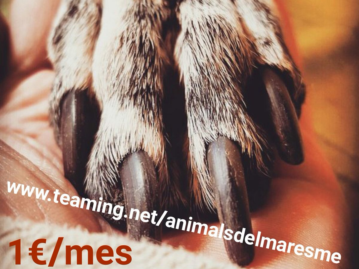 Teaming Animals Maresme