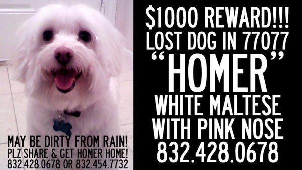 My animal loving friends, PLEASE SHARE!!! #Retweet #Houston #MillieBushPark #LostDog #Missing #FurBaby @ADsXe https://t.co/Zc3h8jqonE