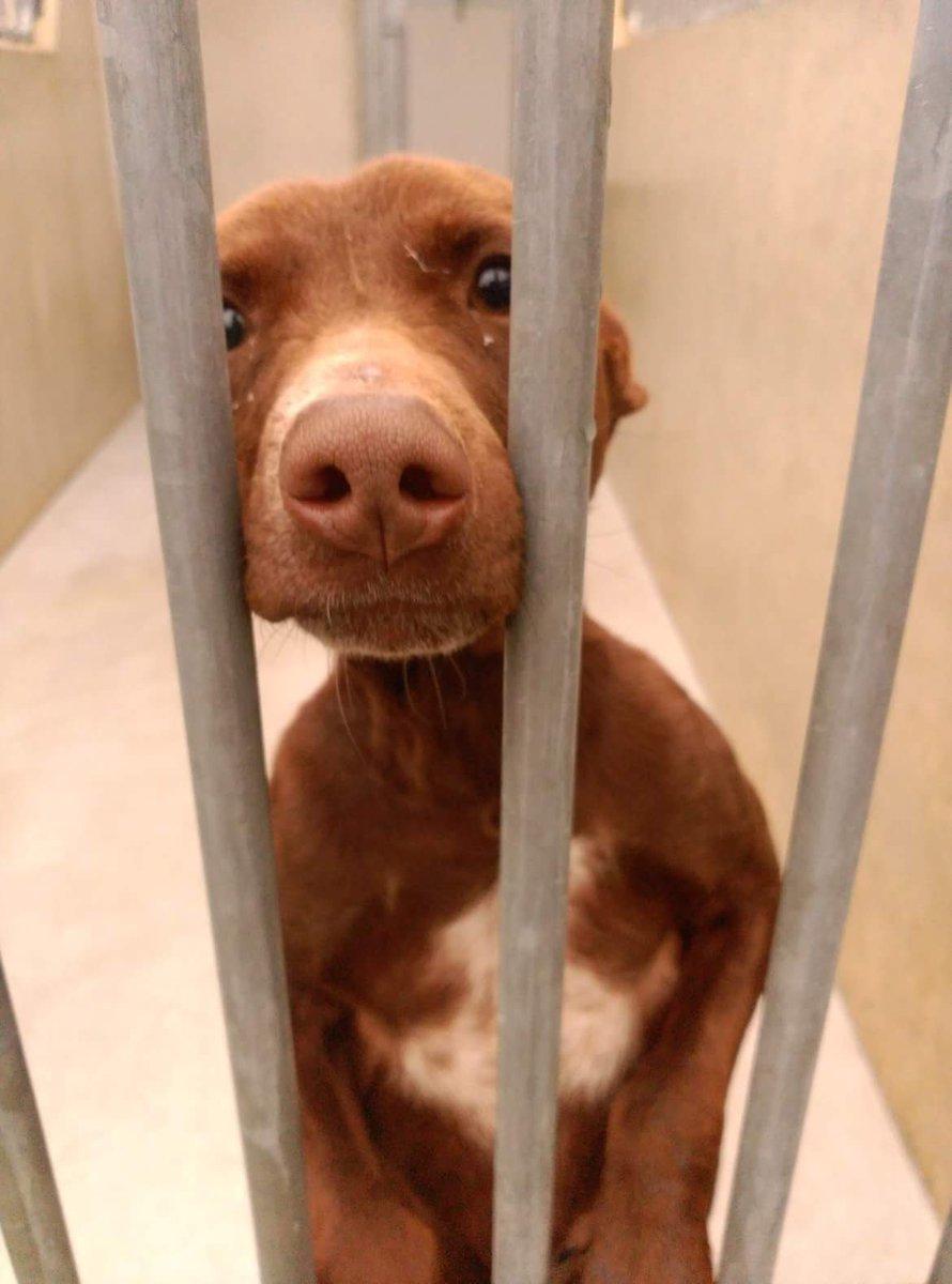 ¿Alguien puede adoptarlo? Está en la perrera de La Fortuna, en Madrid. Es un perrito pequeño de un año. https://t.co/6WrEhuNZ3w