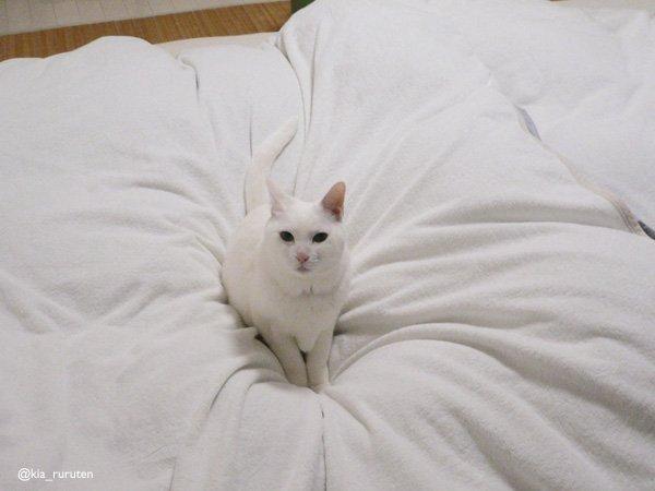 猫に見えるが、これは「ふとんつぶし」という、乾燥機をかけてフカフカにした布団を押し潰し毛まみれにする恐ろしい妖怪じゃ。 pic.twitter.com/avVTe4GsU7