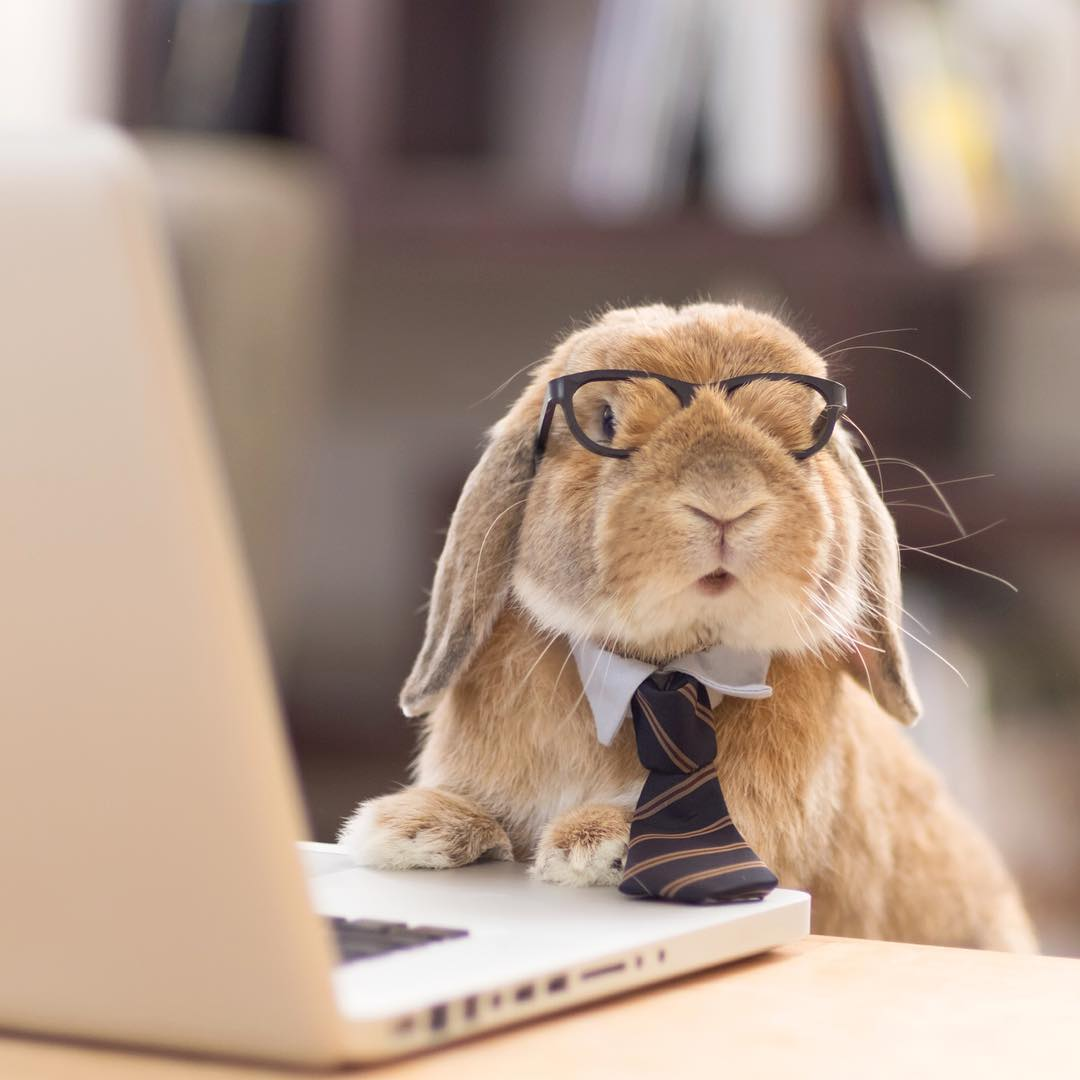 Image result for rabbit on the internet