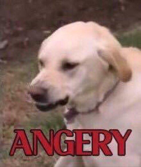CgldEYQU8AA2MPn angery know your meme,Angry Meme