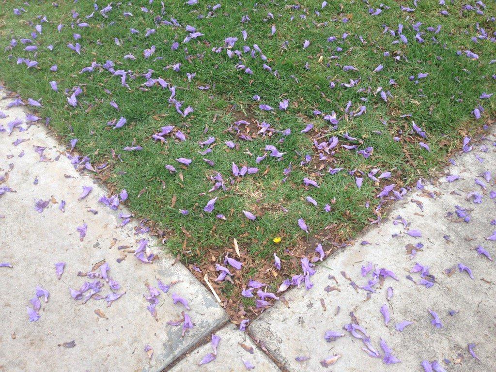 Purple rain for a fallen Prince. #mydayinla https://t.co/d2ujT1KaTL