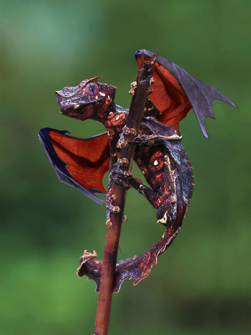 7picaday official on twitter animals are so beautyreal mini dragon httpstcods2bp0qoxr httpstcoq8kgfdiw9q