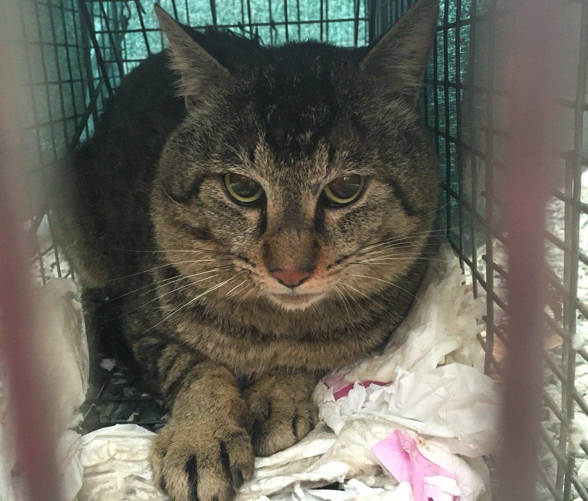 民間災害時動物救済本部の方に保護していた猫を引き取って頂きました!保護された方、または行方不明の犬猫捜索を希望の方は一度ご連絡してみて下さい。 https://t.co/sr6NNdRwuP https://t.co/GMSMWJ7uzu