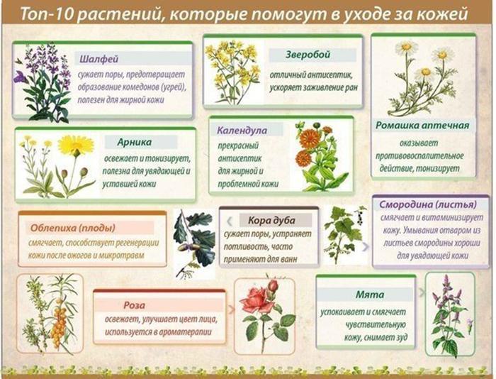 Полезные свойства трав в картинках