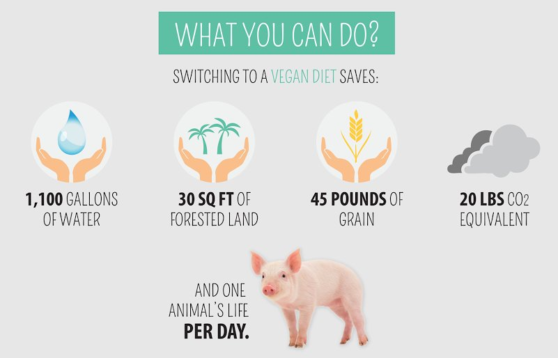 plant based diet could save lives