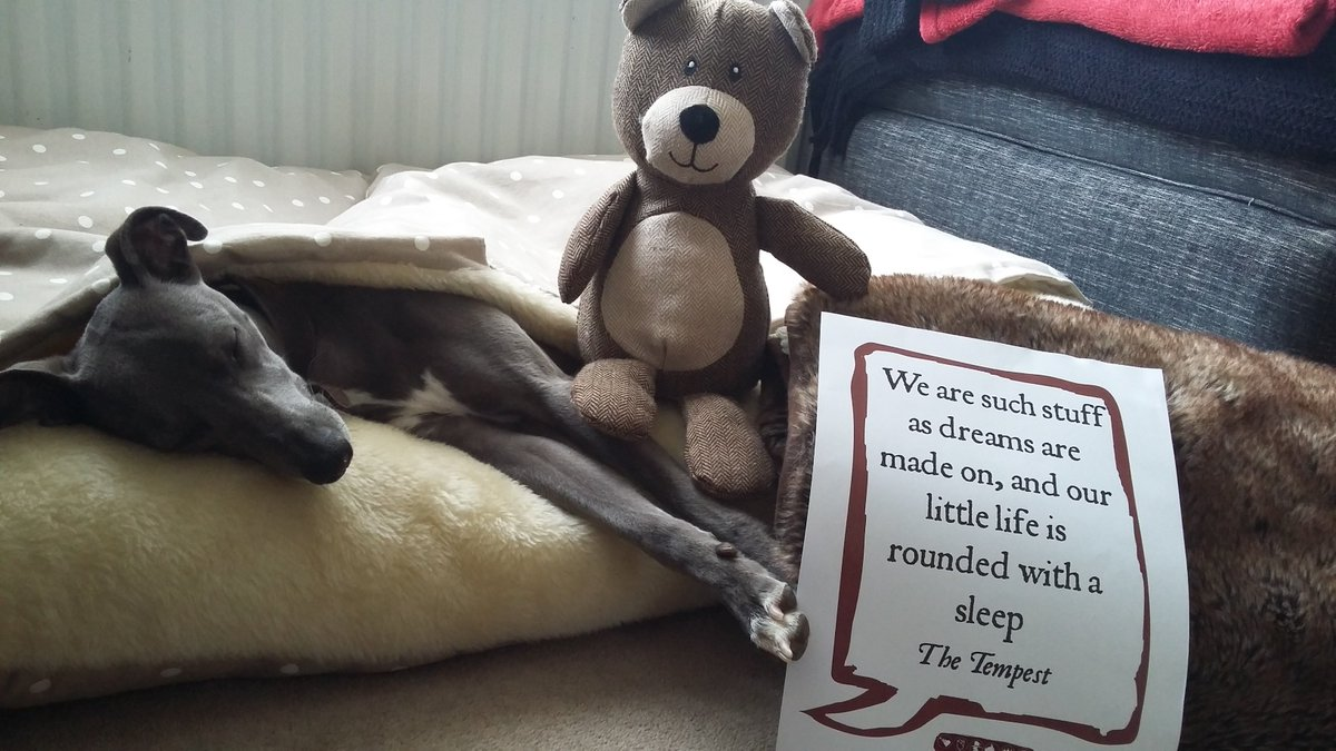 Bluebell the whippet (& teddy) also getting in on the #ShakespeareSelfie act! #Shakespeare16 #Barnsleyisbrill https://t.co/HLvxHrgd7F