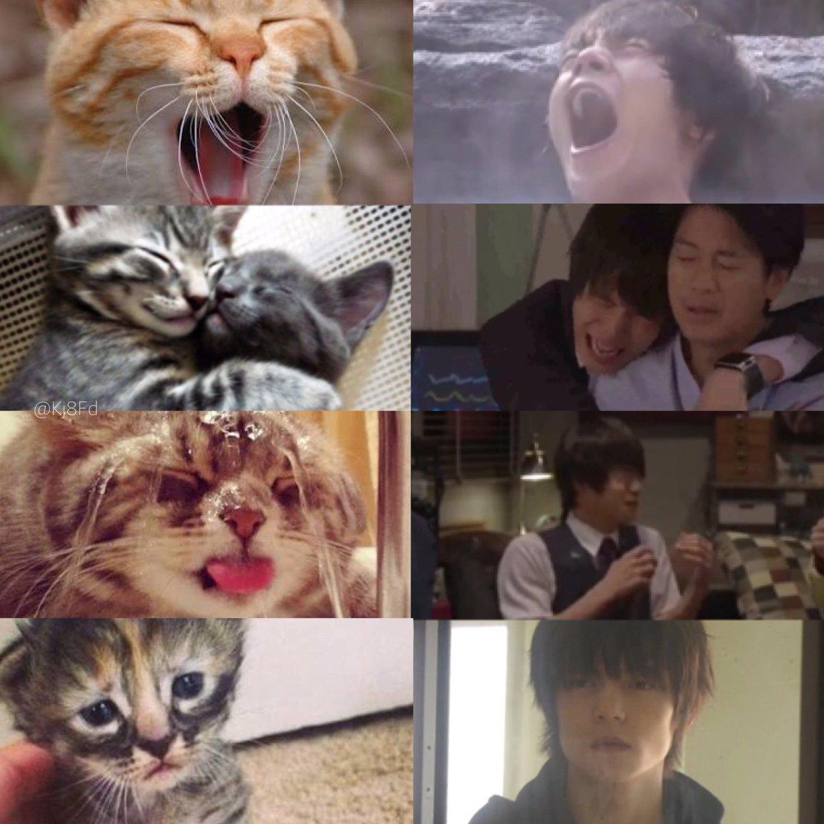 猫好きで有名な窪田正孝ですが  前世は絶対に彼自身が猫だと思う。  <<窪田正孝と猫は一致する>>