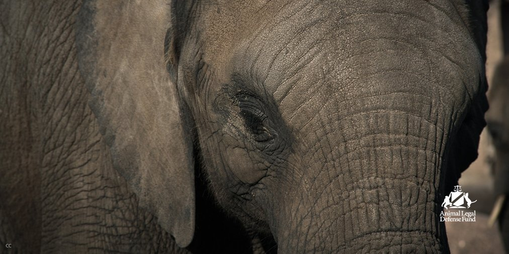 Circus elephants officially retire today in Polk City