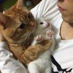 家にやってきた子猫をギューっと抱きしめる先住猫・・癒され度150%♡♡♡