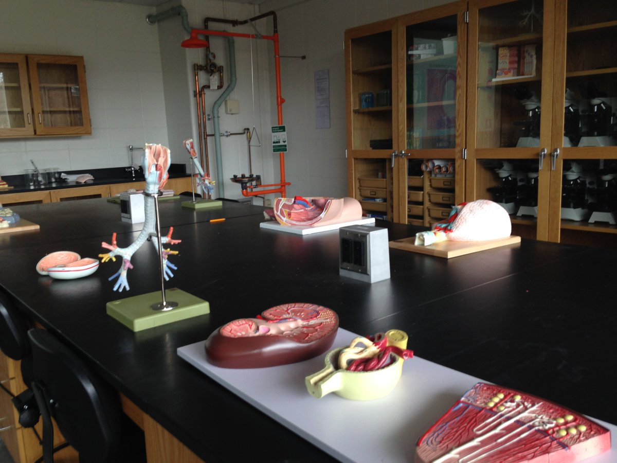 Sarah Courchesne On Twitter The Last Anatomy And Physiology