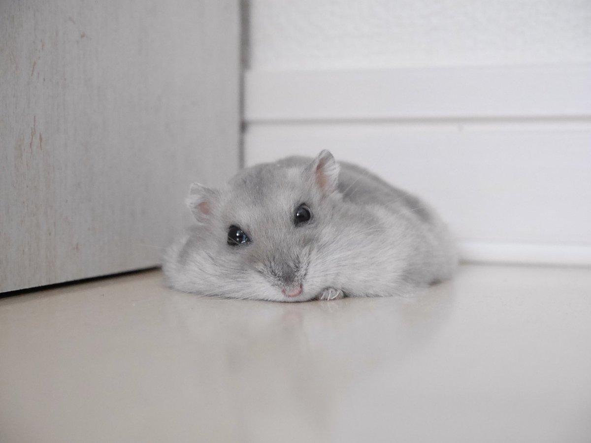 床がひんやりして気持ちいいからぺたりと寝るゆんちゃんと見つめ合いながら床に寝転がるしあわせ…。 pic.twitter.com/zfCPlKCFJR