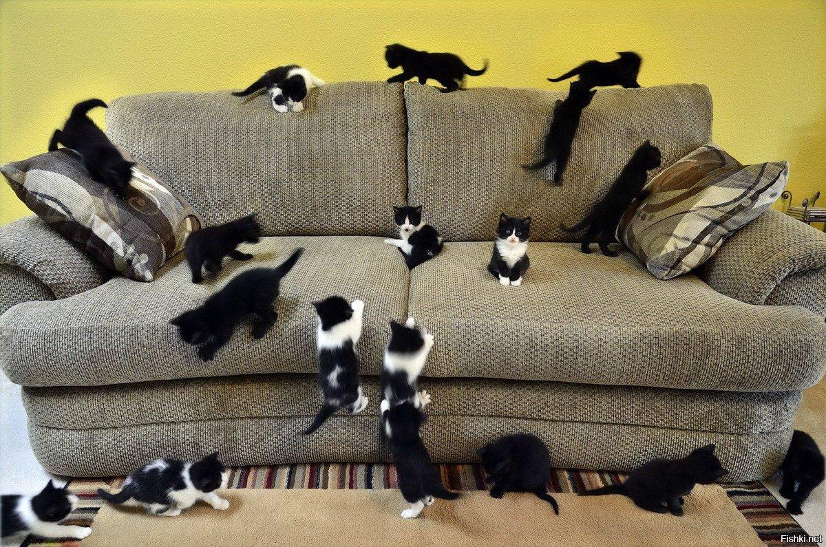 Приключений картинки, прикольная картинка дивана