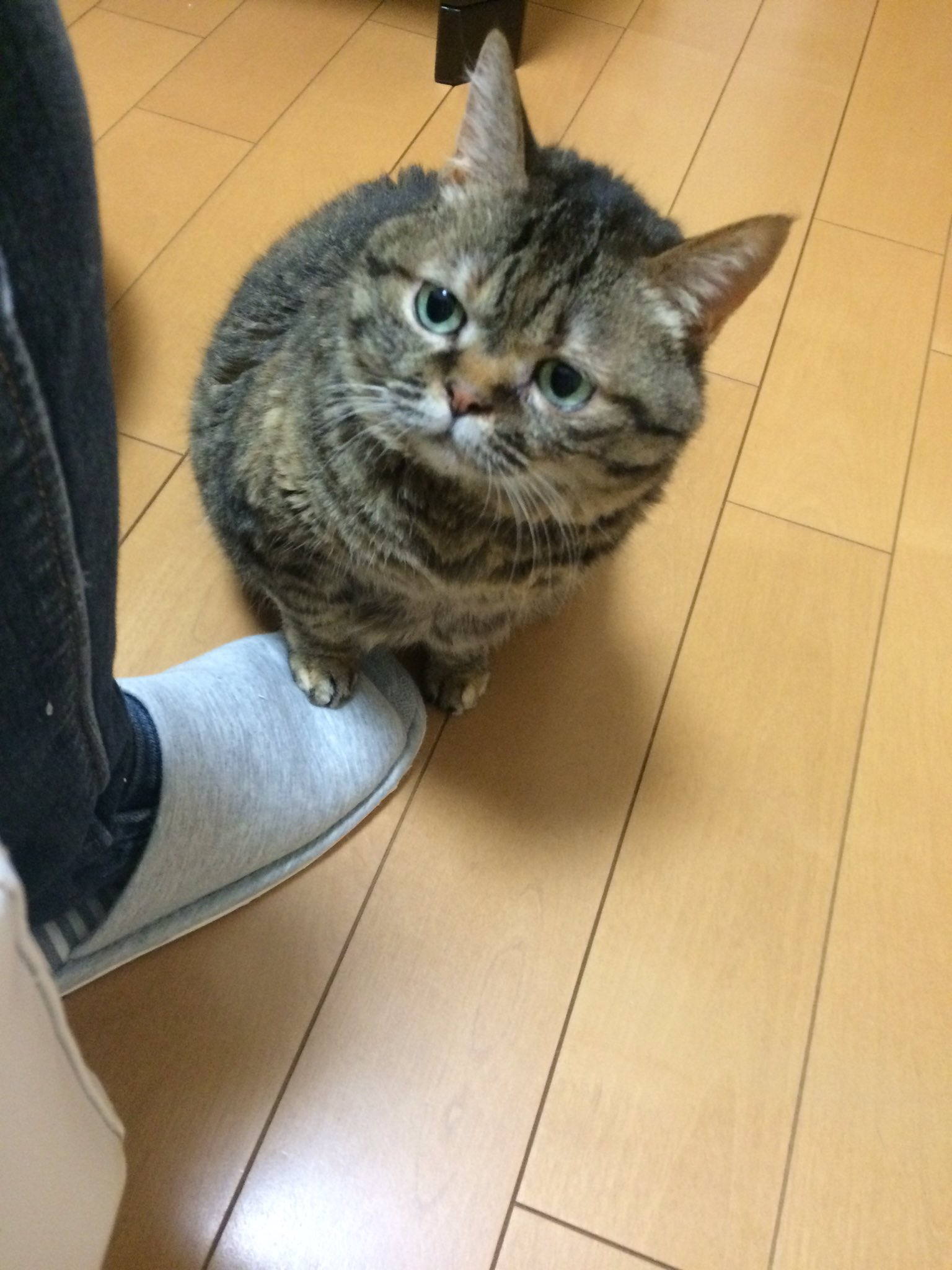 猫が「踏まれる」感覚を直々に叩き込む!?どうだ、痛いだろ!!