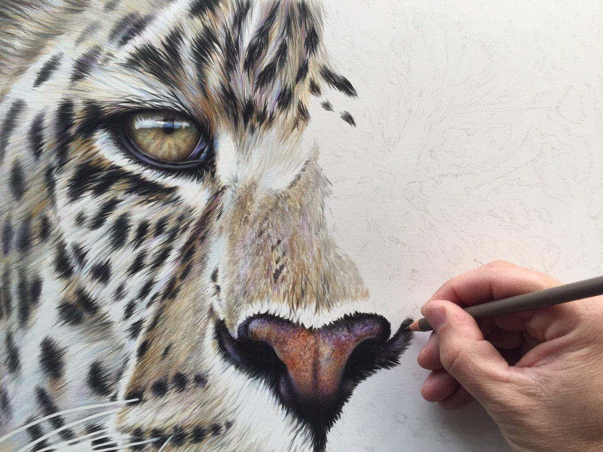 Leopard Pencil Drawings Richard Symonds on Twi...