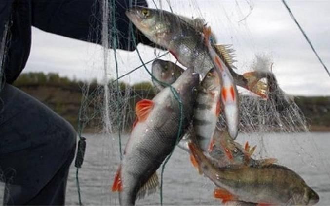штрафы ловить рыбу