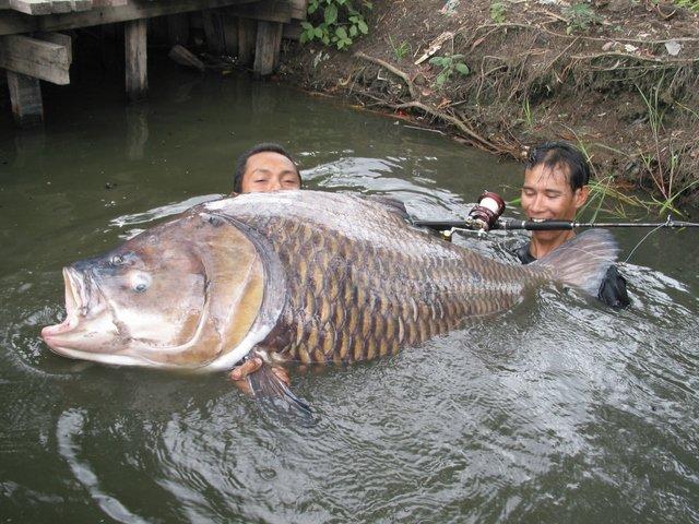 видео рыбалка в каракалпакии