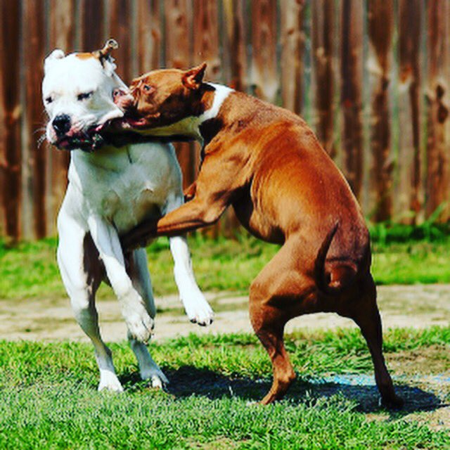 stop dog fights (@stop_dog_fights) | Twitter