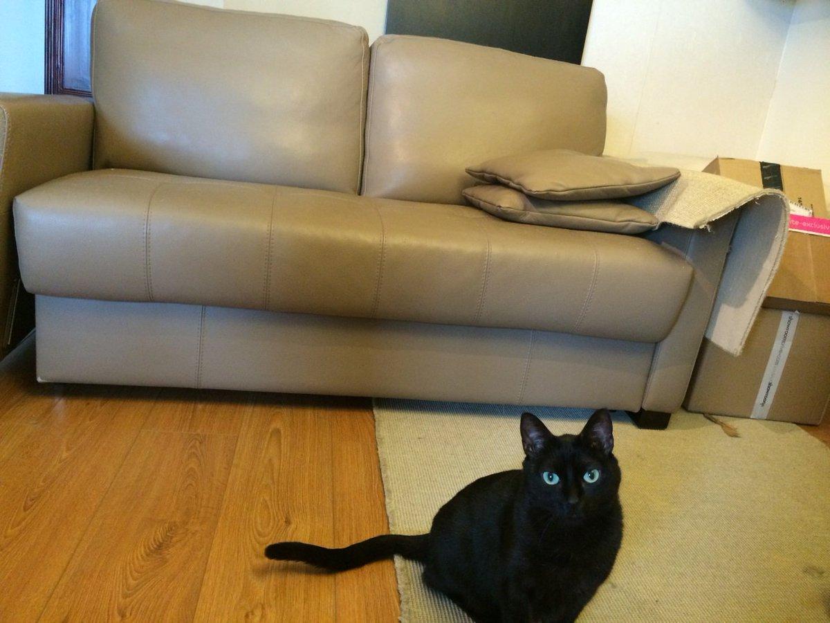 Cat Friendly Sofa On Twitter Jack The