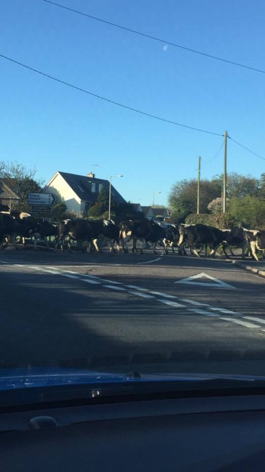 Dorset's rush hour https://t.co/tx8tXWqz5F