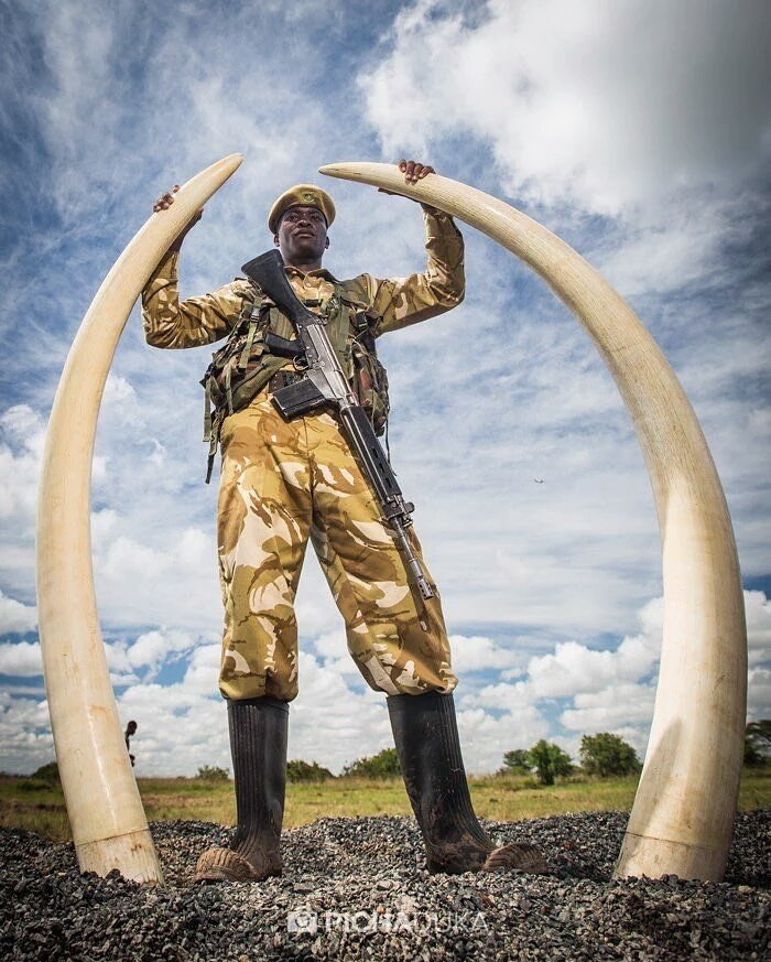 If no Elephant ever complained about the weight of their tusks. Why take them off? #WorthMoreAlive https://t.co/MFEle5SztR