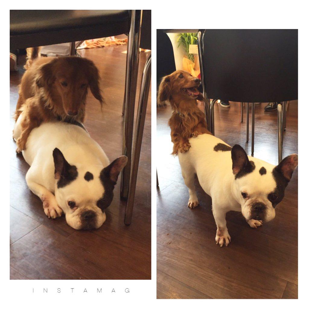 先日行った#保護犬カフェ 大宮店。保護犬と触れ合えて、そこでオーダーしたドリンク代は保護犬の活動費になる素晴らしい場所!関西発で、関東ではまだ印西店、八王子店、大宮店の3店舗。もっともっとこの取り組みをみんなに知ってもらいたい! https://t.co/1itf3eRgNP