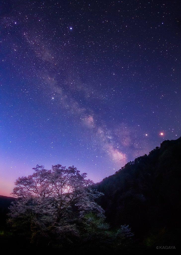 幻想的で儚い…満天の星空と桜が、今宵恋に落ちました