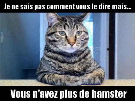 """Têtes Brûlées on Twitter: """"Quand les chats font des bêtises... #MDR Et toi ? c'est quoi ta plus ..."""