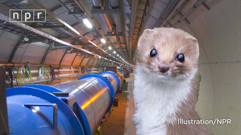 BREAKING: The world's biggest particle smasher is broken. All because of a weasel: https://t.co/UjshzgtjuO https://t.co/V1nZLaDhEy