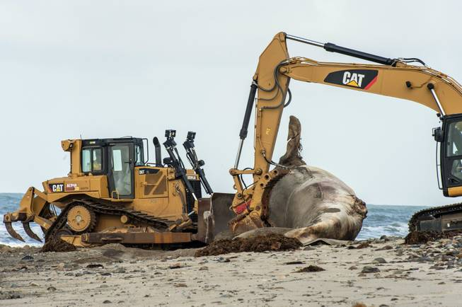 60,000-pound whale carcass removed from California beach