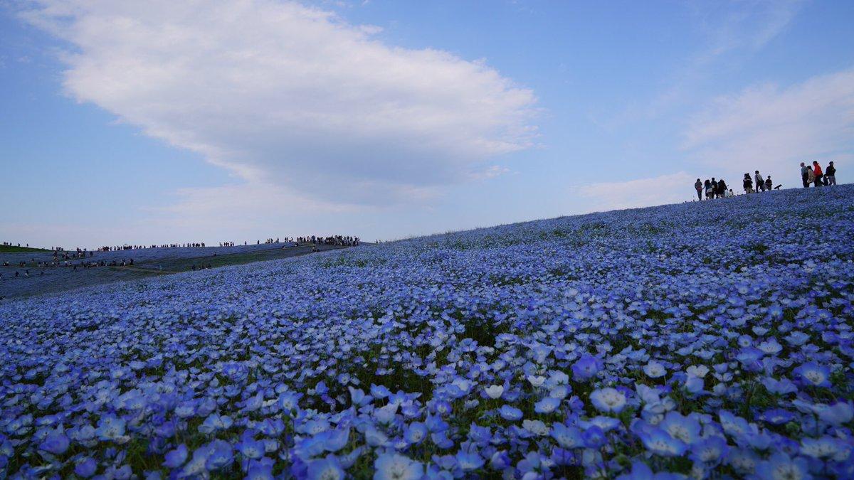 シンデレラタイム 四月も今日が最終日 熊本地震被害者の皆様、 早く元の落ち着きを取り戻し、安心して、暮らせますように! 素敵なGWをお過ごし下さい。 おやすみなさい https://t.co/Bx7LSBLkt1