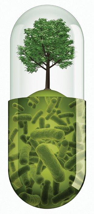 Thumbnail for 15. Microbios y plantas