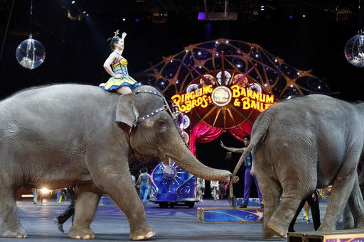 Elephants to perform for final time at Ringling Bros. circus