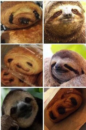 CS Pacat On Twitter Sloth Or Pain Au Chocolat GPOY