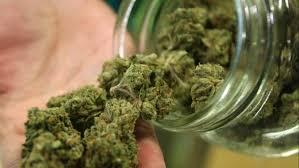 NSW makes bid to grow medicinal cannabis – Yahoo7